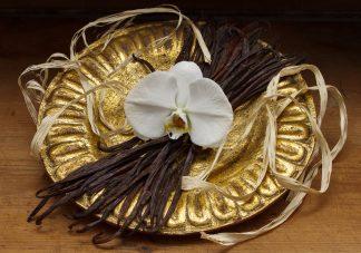 Premium Vanilla 16 to 20cm